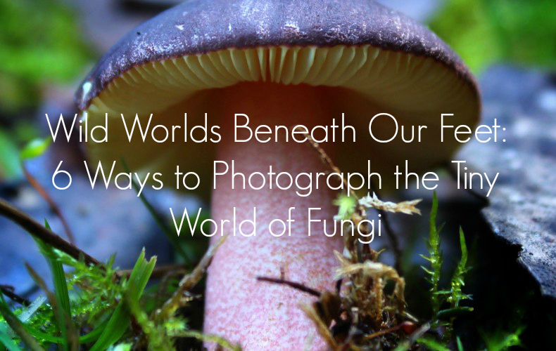 Wild Worlds Beneath Our Feet: 6 Ways to Photograph the Tiny World of Fungi We Are Wildness