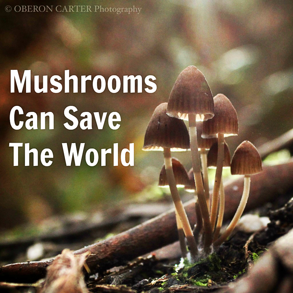mushrooms can save the world oberon carter we are wildness