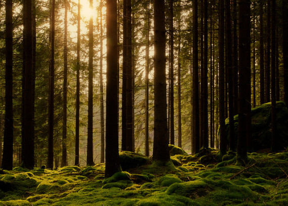 The Forest: What it can teach you about yourself