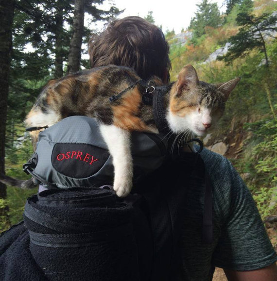 Meet Honey Bee, The Amazing Blind Cat and Hiking Companion