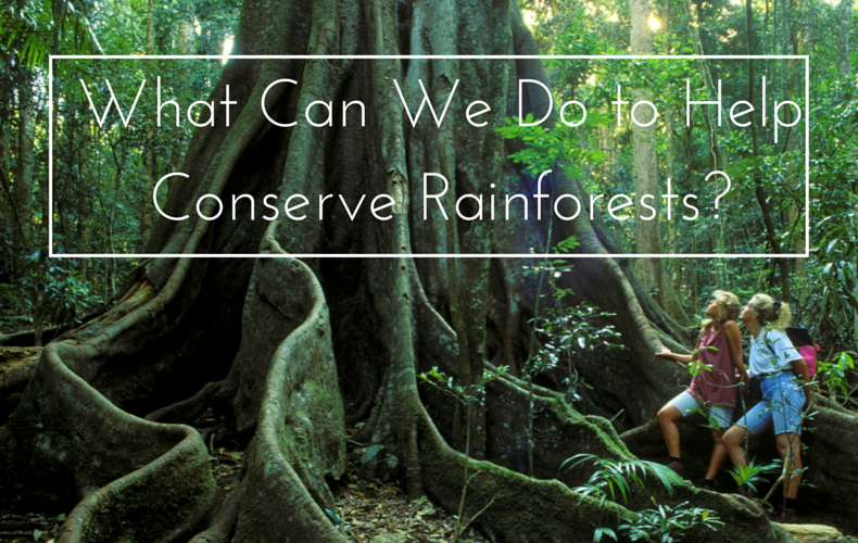 What Can We Do to Help Conserve Rain Forests Kate Wilson We Are Wildness Blog