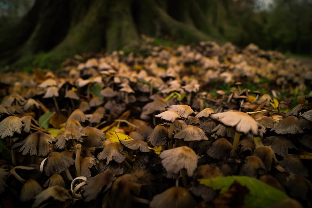 we are wildness forest autumn mushrooms rewildyourlife wildfoodlove