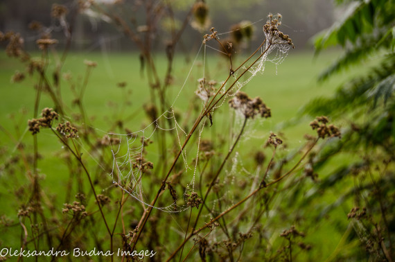 Reclaiming Nature Words: 6 Ways to Rewild Your Vocabulary