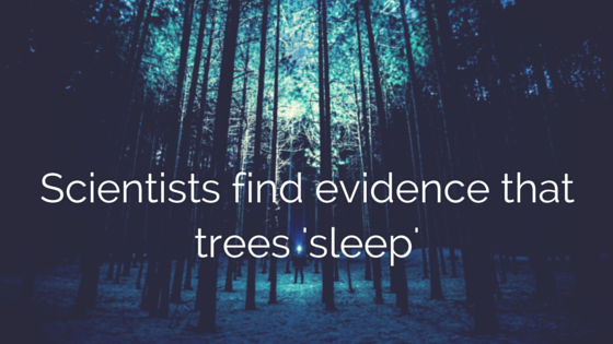 Scientists find evidence that trees 'sleep'