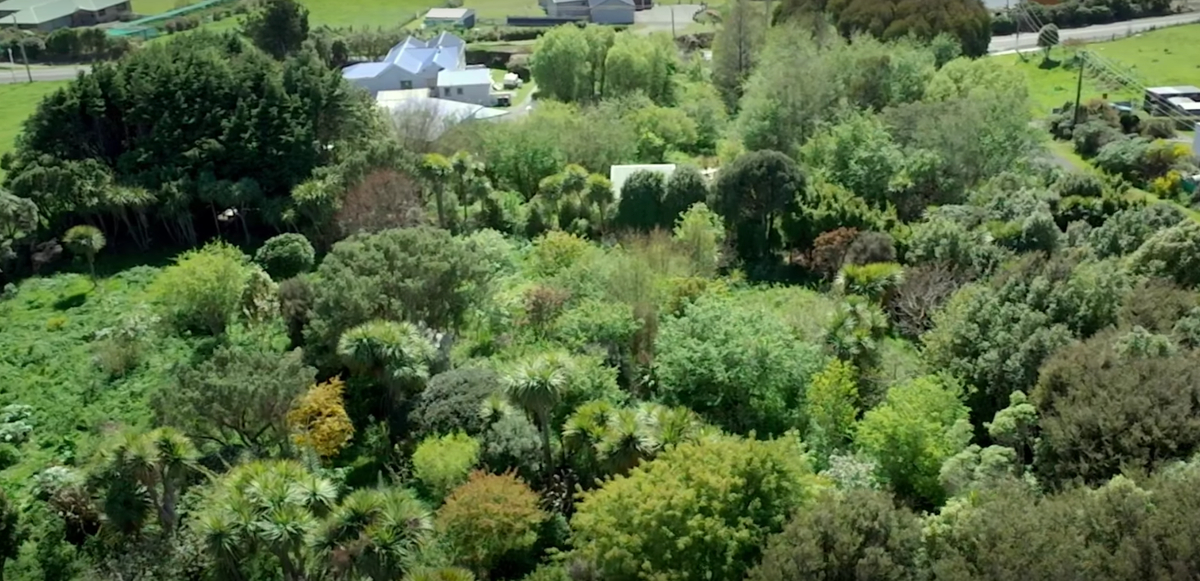 Couple Buys Lot and Transforms it into a Food Forest Paradise