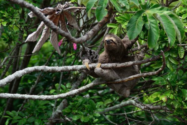 sloth lessons people can learn from animals we are wildness blog header