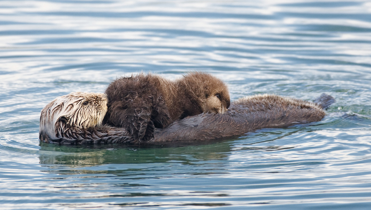 Photos of animal parents and their offspring (they will melt your heart)