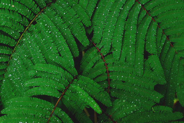 ferns and drops