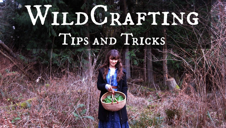 Wildcrafting – Tips and tricks for your next adventure
