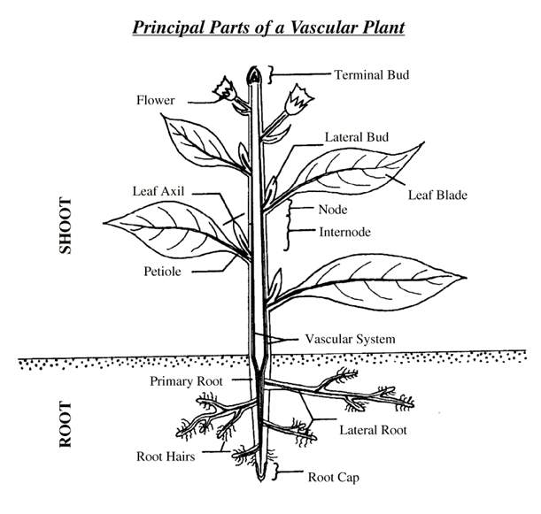 parts_of_the_plant