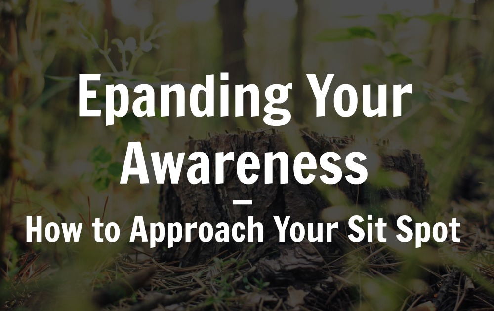 expanding your awareness how to approach to your sit spot blog we are wildness