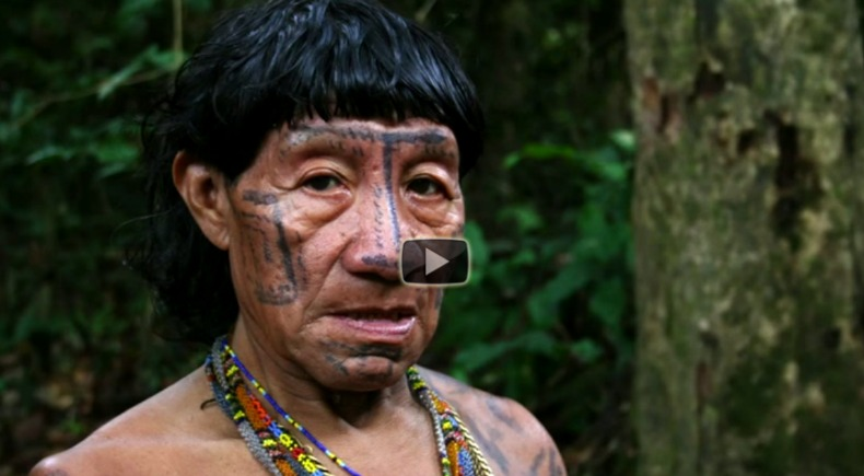 amazon rainforest ted talks video blog we are wildness