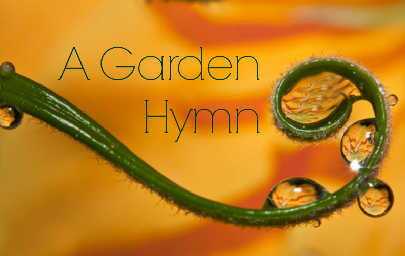 A Garden Hymn Featured | We Are Wildness