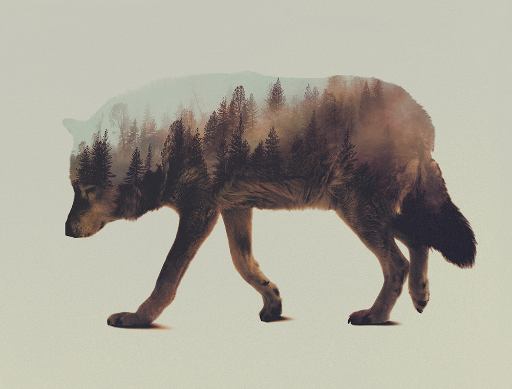 Stunning Double Exposure Animal + Wilderness Portraits