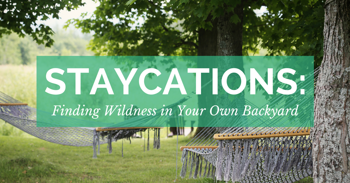 Staycations: Finding Wildness in Your Own Backyard