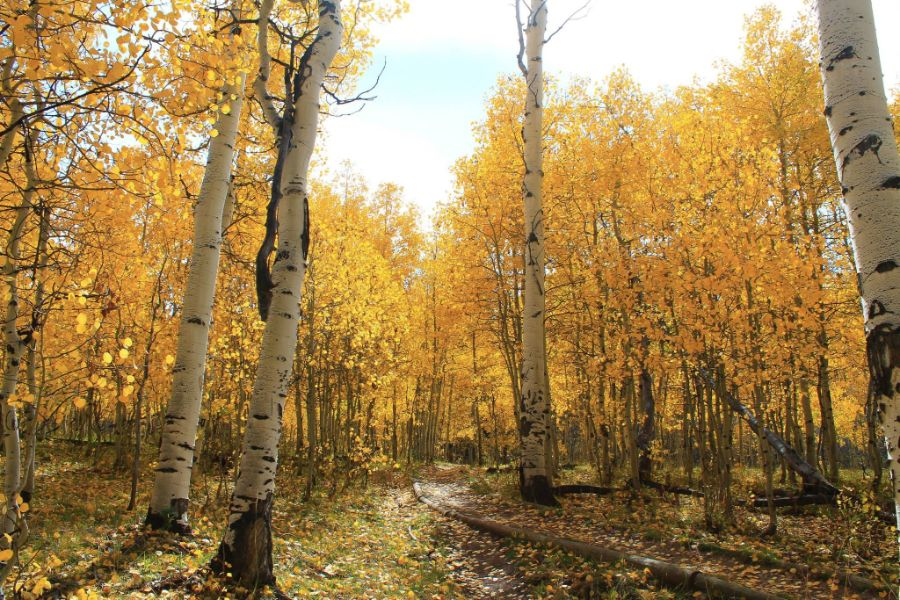 5 Ways to Say Good-Bye to Summer (and Hello to Fall) we are wildness 3 trail