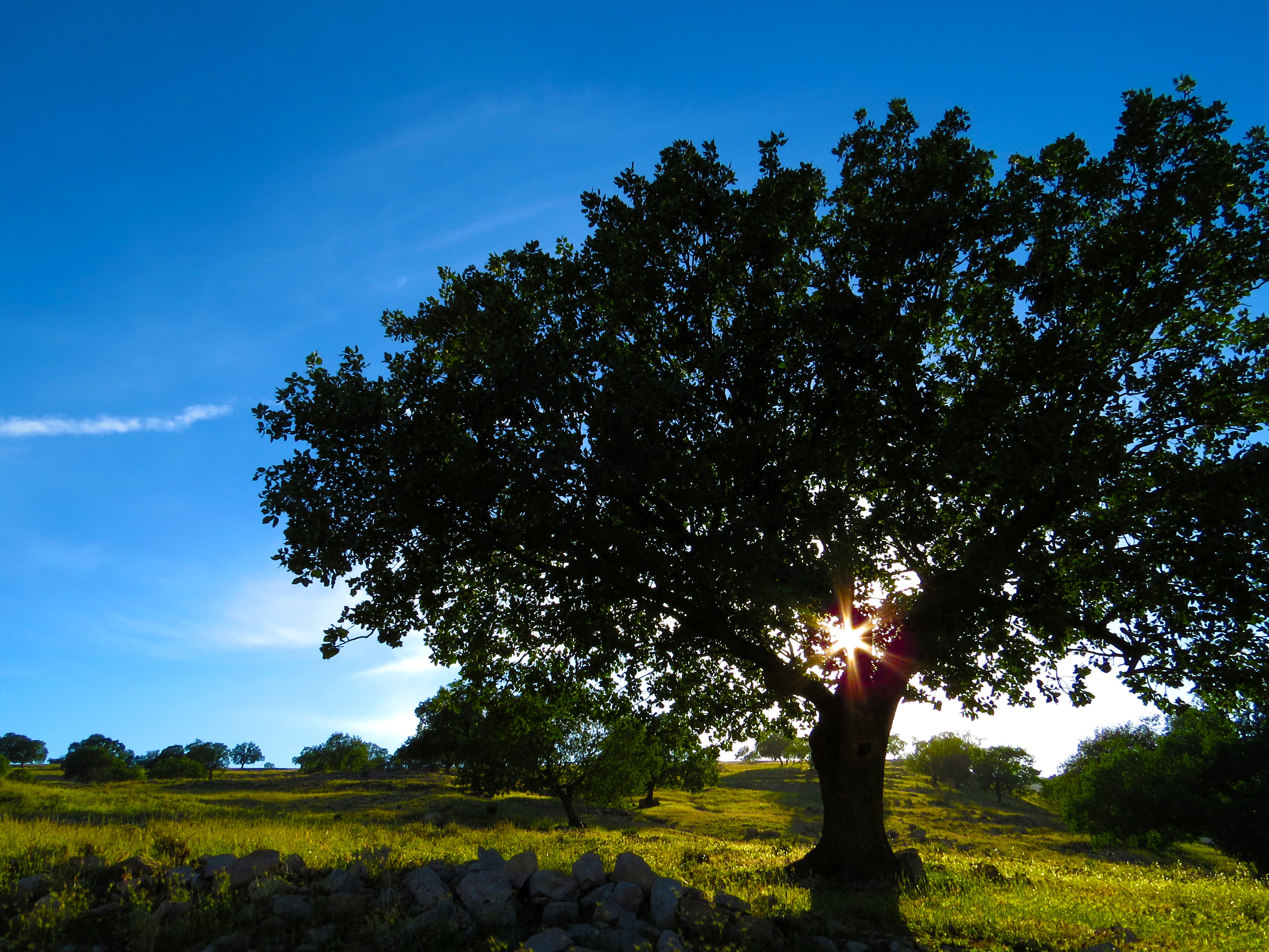 How Trees Improve Our Existence