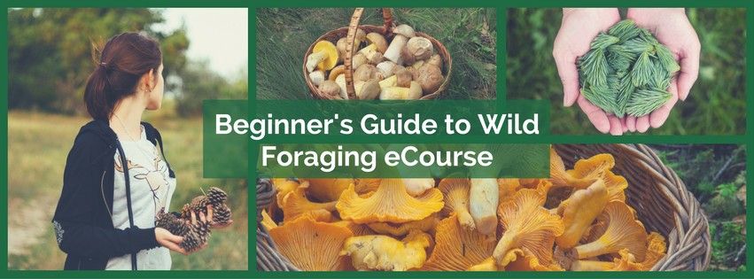 beginners-guide-to-wild-foraging