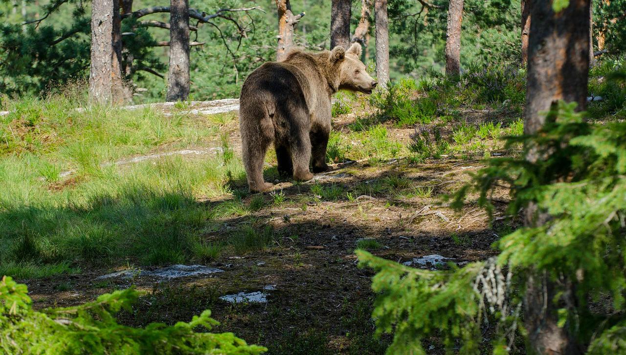 How to Behave Around Wild Animals