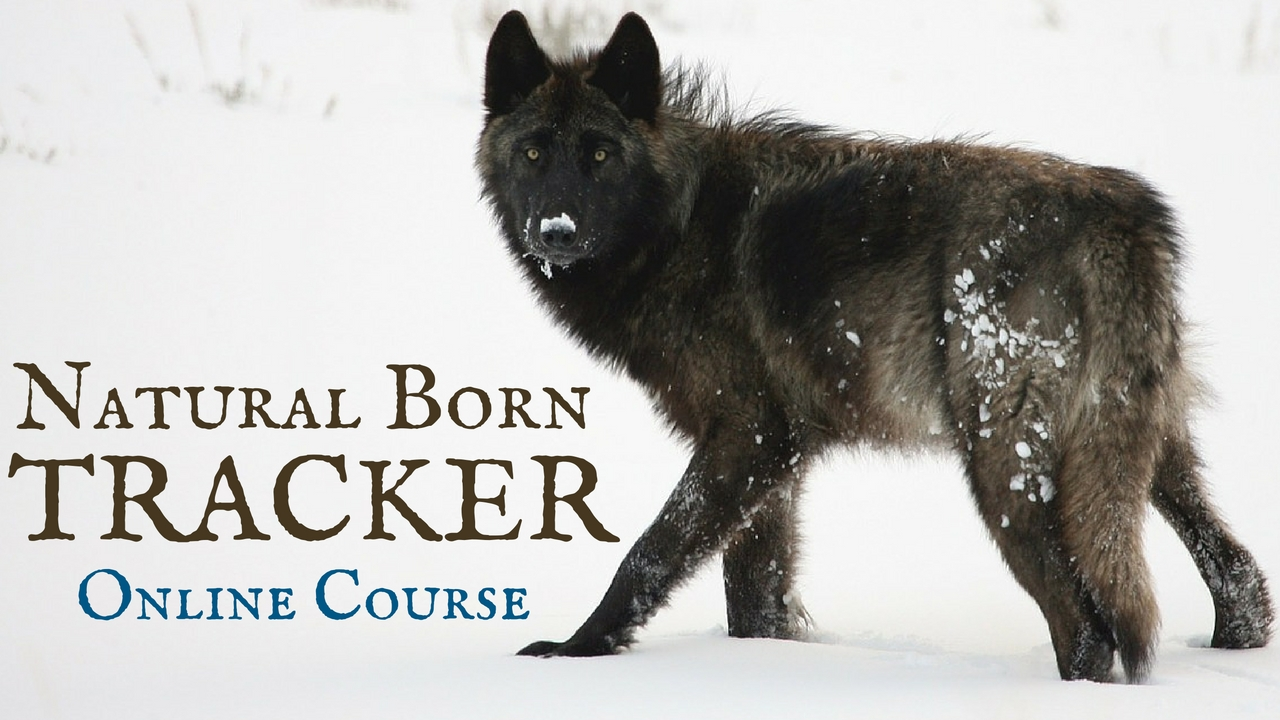 natural-born-tracker-online-course-we-are-wildness-university