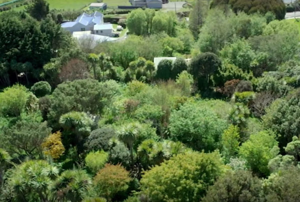 permaculture food forest documentary inviting wildness happen films we are wildness blog header Couple Buys Junk Filled Lot And Transforms It Into A Permaculture Food Forest Paradise - we are wildness blog - rewild your life