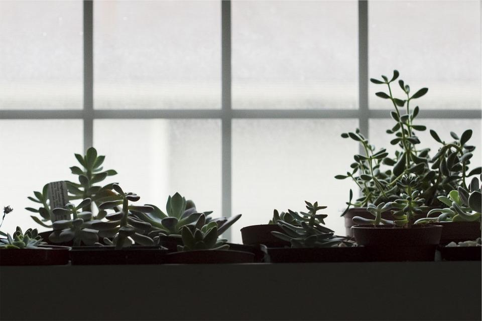 tune in to the earth this winter blog we are wildness succulants window