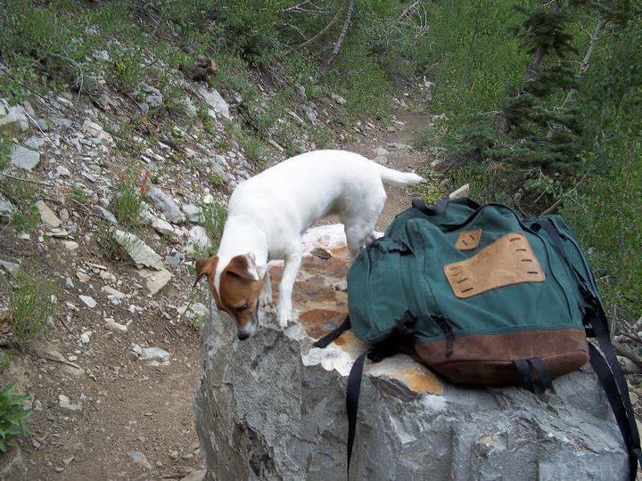 bill huggins dog blog we are wildness