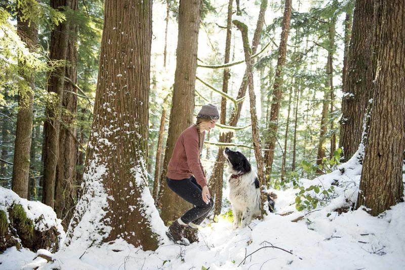 rsz_wilderharrier_april_bencze_dog_snow_light