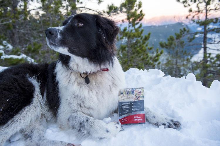 wilder harrier dog treat snow