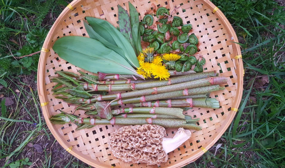 Wild Foraging – Best Practices for Personal Safety and Sustainability