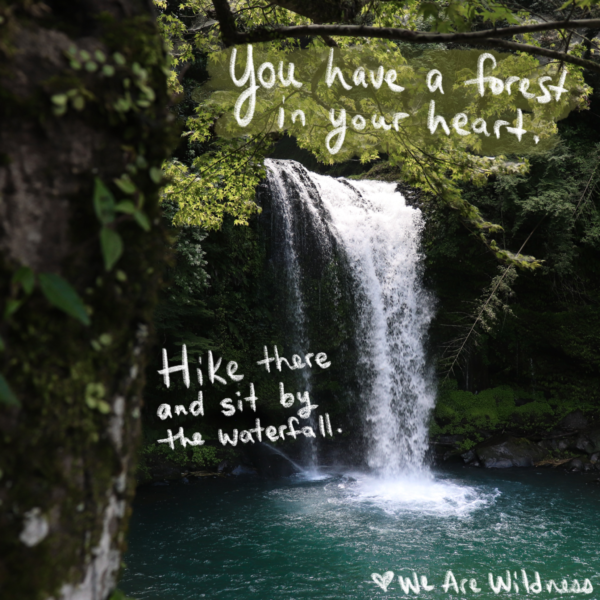 You_have_a_forest_in_your_heart